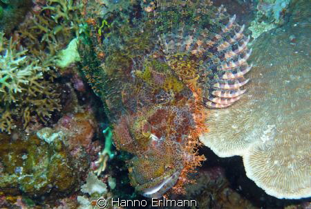 At Frog Fish Point, Gili Air, Indonesia by Hanno Erlmann