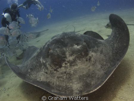 A stingray on a dive in Tenerife by Graham Watters