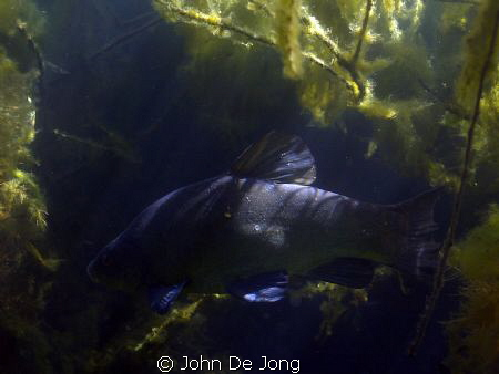 Last weekend during snorkling, without strobe/light. by John De Jong