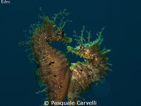 Hippocampus is love.