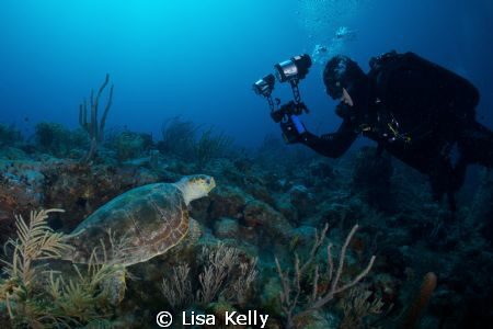 Face off between a photographer and a turtle. by Lisa Kelly