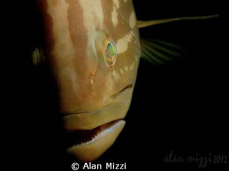 A very inquisitive young Goldblotch Grouper. by Alan Mizzi