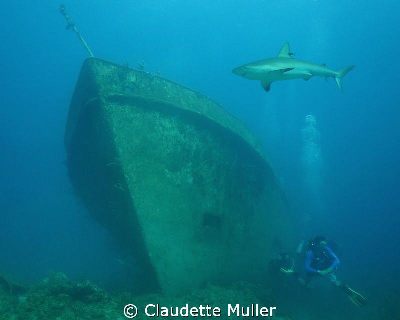 Shark? Where?...... by Claudette Muller