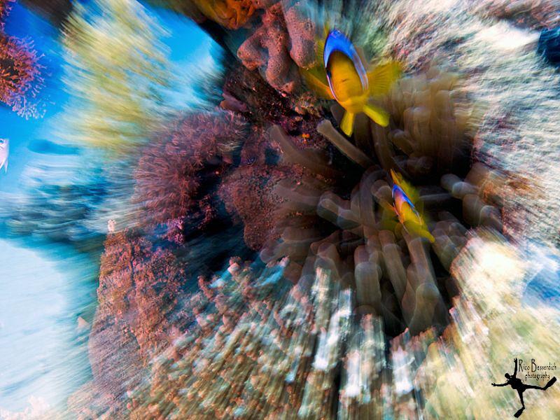 """""""Beam me up, Nemo !"""" Zooming shot ( made underwater, not ... by Rico Besserdich"""