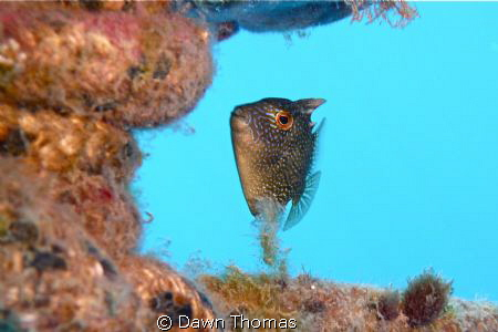Small File Fish sheltering under a marker buoy during our... by Dawn Thomas