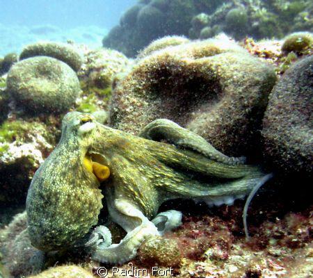 chobotnice by Radim Fort