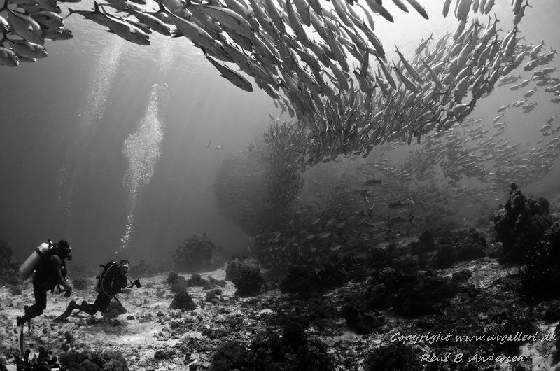 taken in Bohol, Panglo island by Rene Braband Andersen