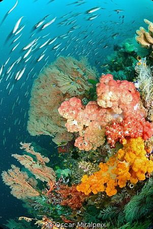 One of my favourites places in Raja Ampat, Friendly Canyo... by Oscar Miralpeix