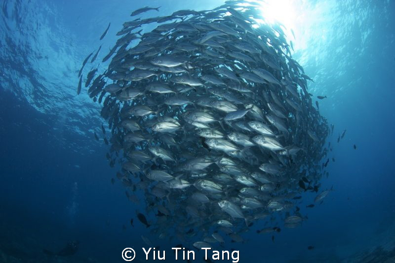 Always seen others made this shot, now my turn! Canon 60... by Yiu Tin Tang
