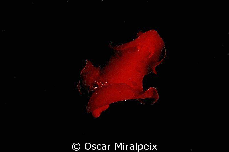 """Spanish dancer"" DANCING in the night by Oscar Miralpeix"