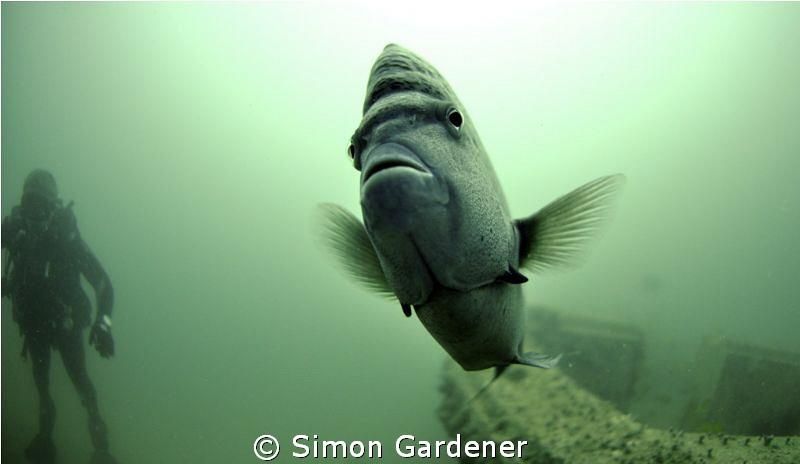 Yellow bar anglefish ,shot with 10.5 nikkor fisheye by Simon Gardener