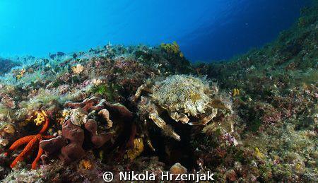 crab keeps your home by Nikola Hrzenjak