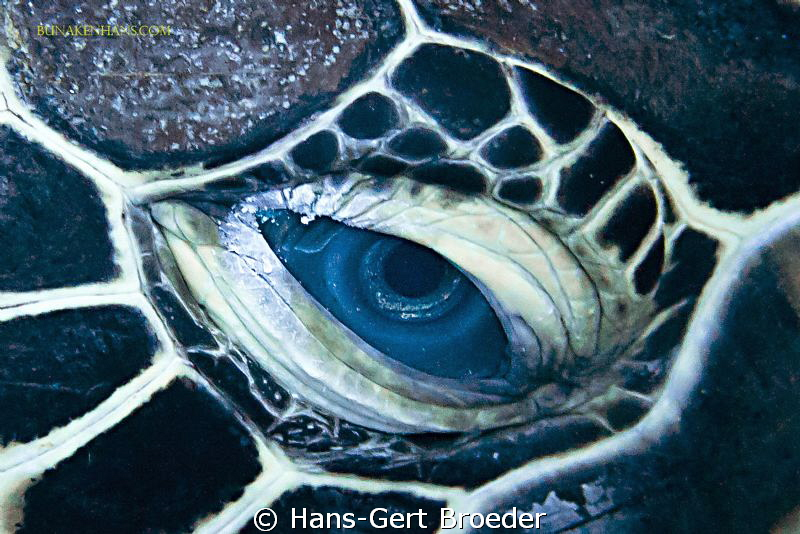 Green Turtle Bunaken Island, Sulawesi,Indonesia, Nikon ... by Hans-Gert Broeder