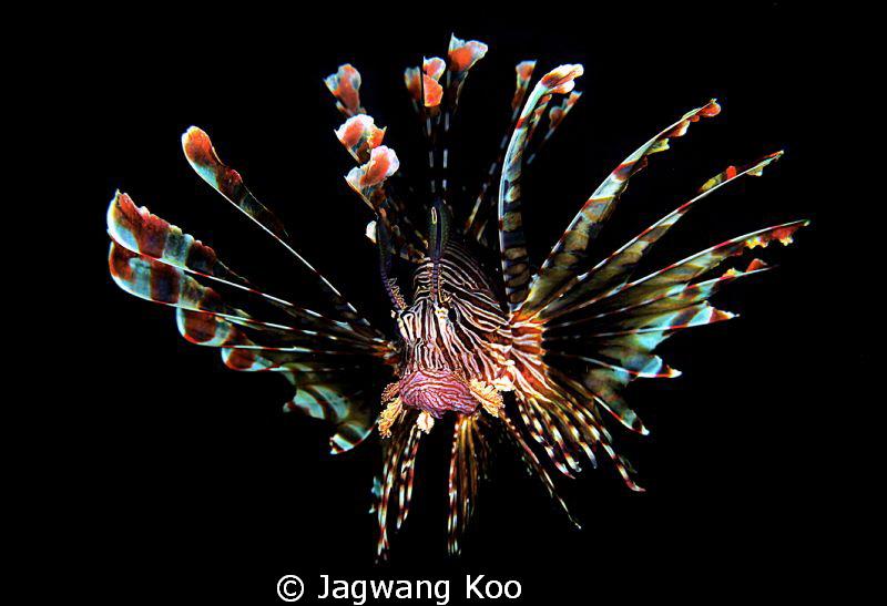 lion fish by Jagwang Koo