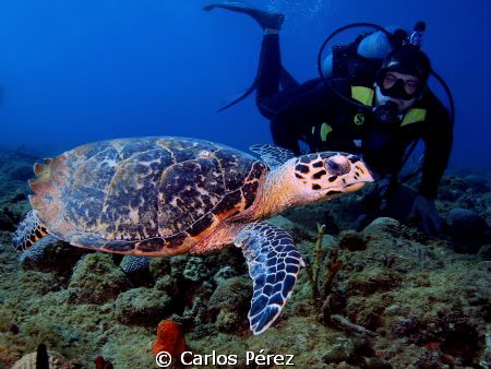"""My dive buddy"" The turtle not the diver.. Literally this... by Carlos Pérez"