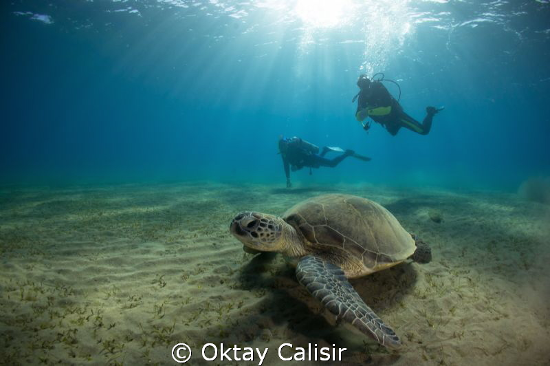 Turtle and Divers! by Oktay Calisir