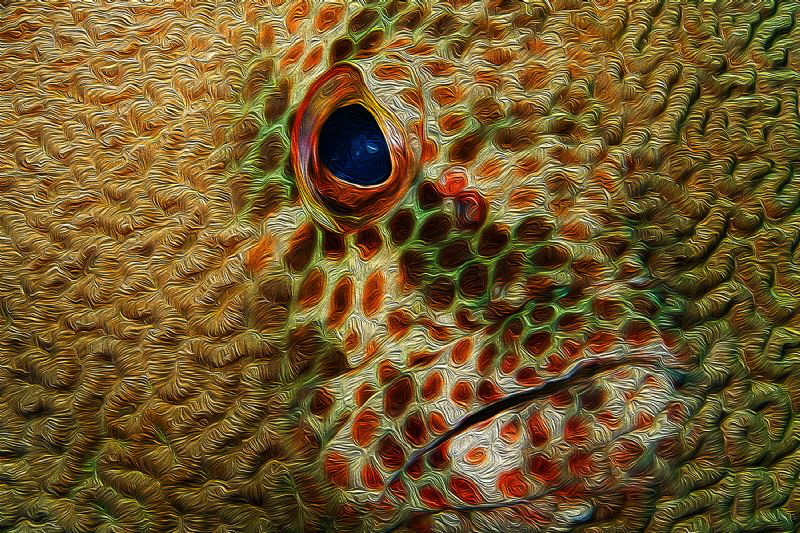 'Coral Grouper': South Atlantic grouper merged into a Red... by Paul Colley