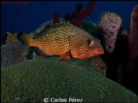 After photography vacations today came back and shot this... by Carlos Pérez