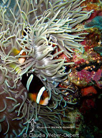 playing in Nemo's garden..... by Claudia Weber-Gebert