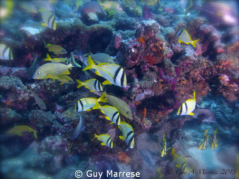 A Blend of fishes off Ft Lauderdale Florida ... Yes there... by Guy Marrese