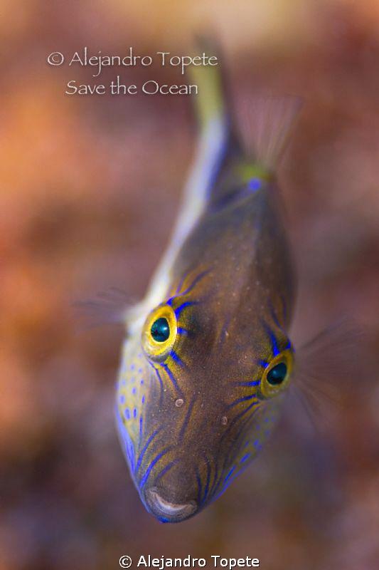 Funny eyes, San Pedro Belize by Alejandro Topete