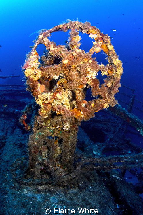 Soft corals on the wheel of The Imperial Eagle in Malta by Elaine White