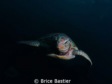 Curious green turtle checking me out 