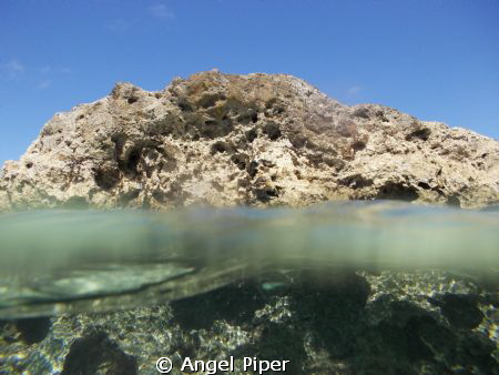 I was standing by the rock when i saw a school of tiny li... by Angel Piper