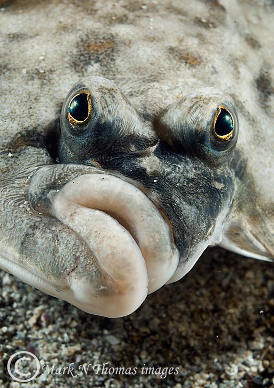 Plaice Face. by Mark Thomas