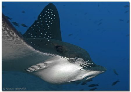 - close up -