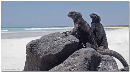 - It's their country -