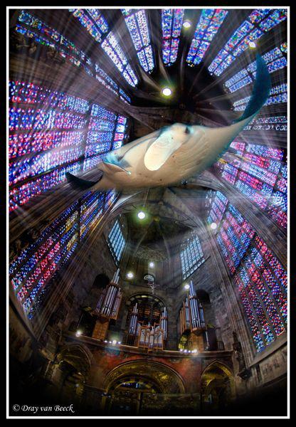Manta Rays... by Dray Van Beeck