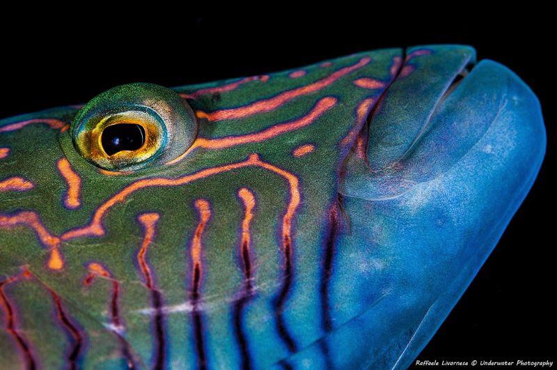I see you!!! by Raffaele Livornese