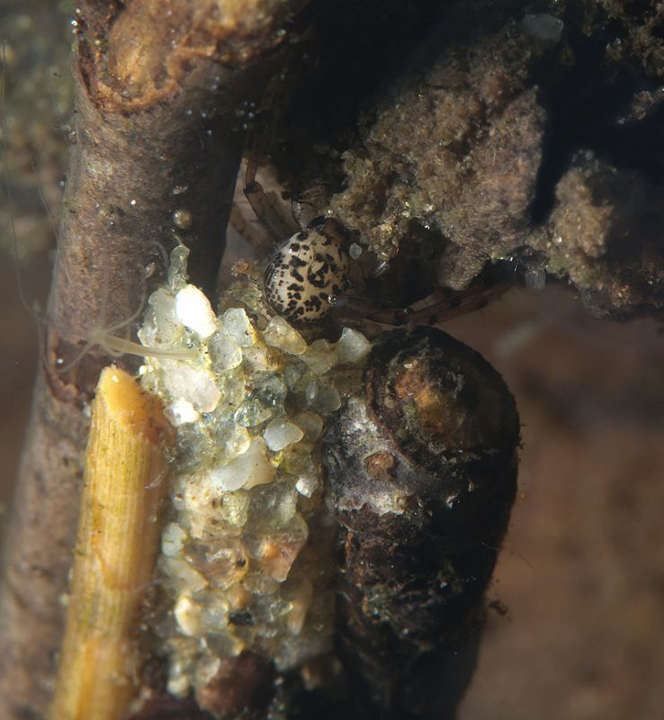 Caddis fly larva by Chris Krambeck