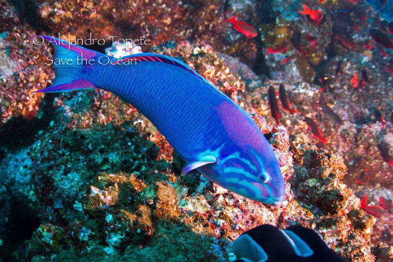 Litle Fish, Galapagos Ecuador by Alejandro Topete