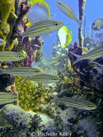 Nature's aquarium by Michele Kelly