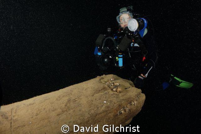 Diver poses at the broken bowsprit on the Tiller Wreck, L... by David Gilchrist