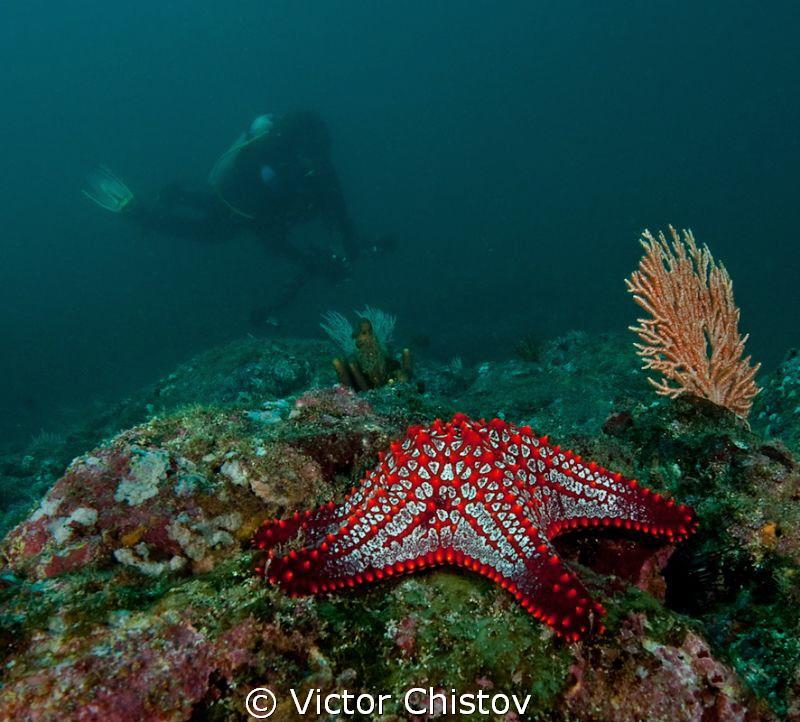 Red Star by Victor Chistov