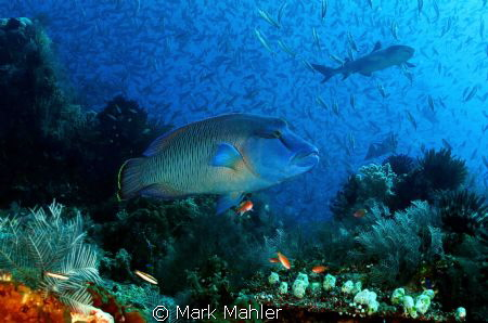 Crystal Rock dive site in Komodo National Park.Flores Sea... by Mark Mahler