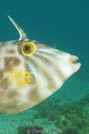 A nicely coloured leatherjacket. The picture is a crop fr... by Daniel Poloha