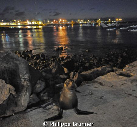 Galapagos's night life by Philippe Brunner