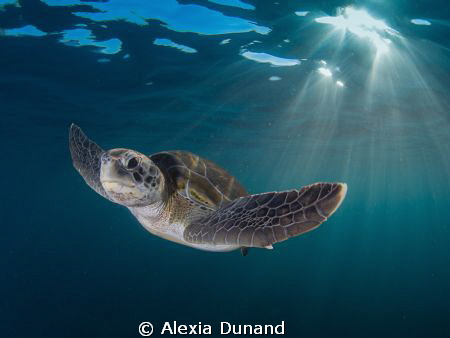 Me and You. Green Turtle. Endangered.