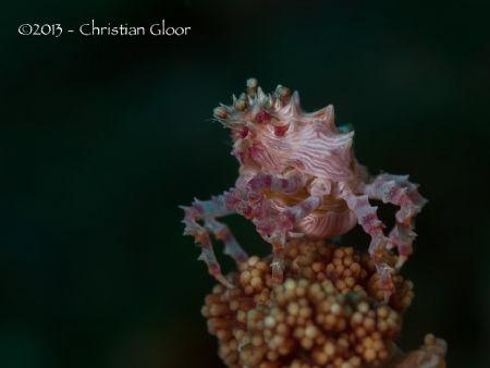 Taken in Lembeh Strait. by Christian Gloor