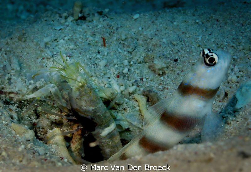 symbiose by Marc Van Den Broeck