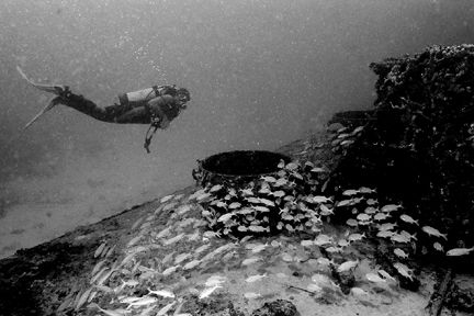 Diver approaches a wreck and a small school of Grunts. Ta... by Matthew Shanley