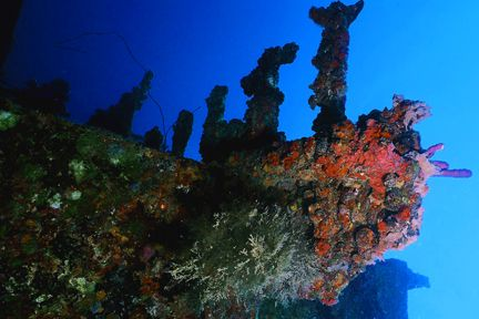 Bow of the Jane C., Aruba. Nikonos V, 20mm lens, Ikelite ... by Matthew Shanley