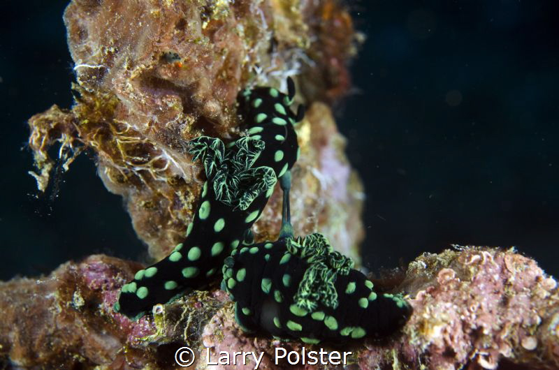 Pair of nudis making babies on the deck of a wrech by Larry Polster
