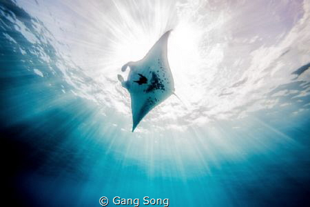 A Manta Ray enjoyed her sunbathing. by Gang Song