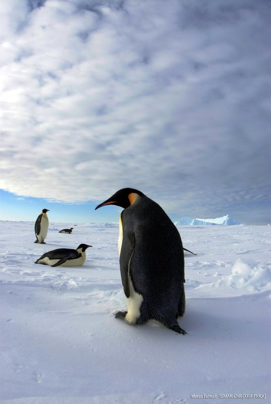 Walking on sea ice - Terra Nova Bay - Antarctica by Marco Faimali (ismar-Cnr)