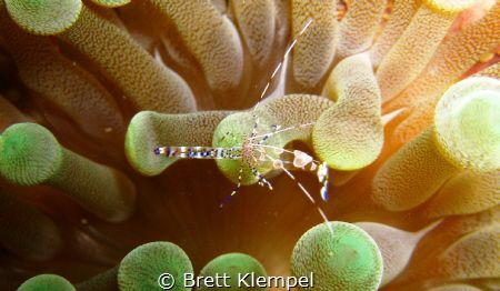 i wear my heart on my back... by Brett Klempel
